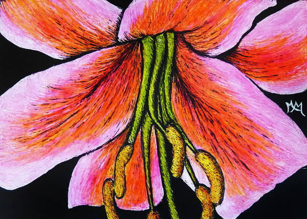 Drawing - Pink Lily by Monique Morin Matson