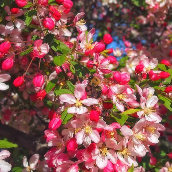 Photograph - Pink Magnolia 2 by Joann Vitali