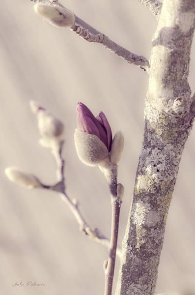 Chicago Botanic Garden Photograph - Pink Magnolia Bud  by Julie Palencia
