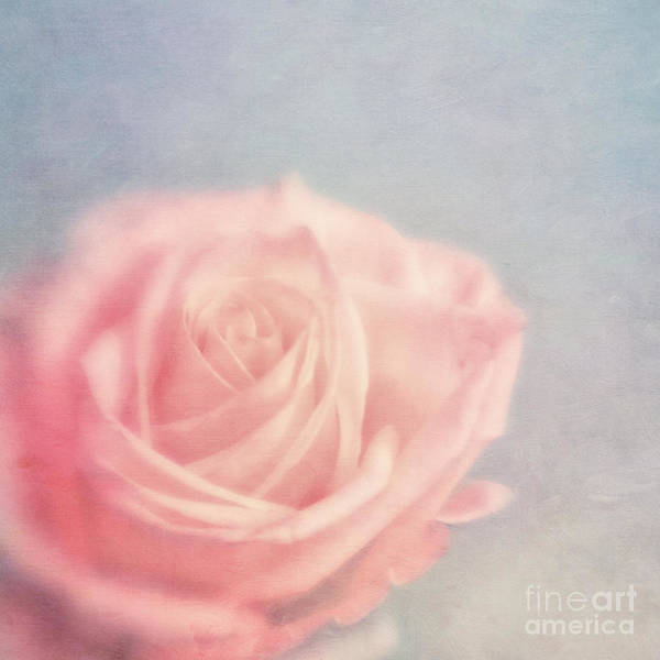 Pink Rose Photograph - pink moments I by Priska Wettstein