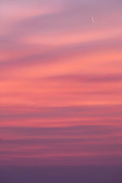 Photograph - Pink Moon by Bill Wakeley