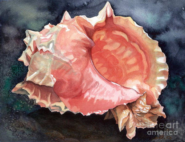 Wall Art - Painting - Pink-mouthed Murex by Barbara Jewell