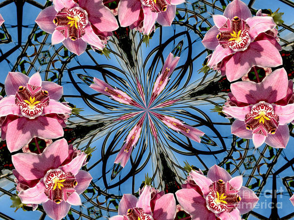 Photograph - Pink Orchid Kaleidoscope 2 by Rose Santuci-Sofranko
