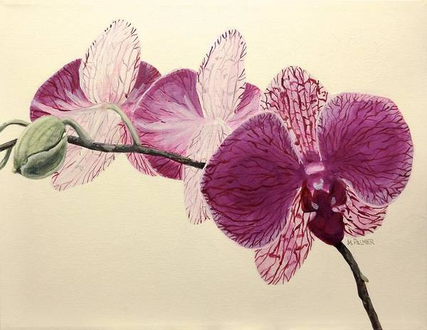 Painting - Pink Orchid by Mary Palmer