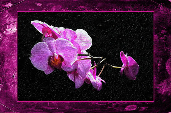 Photograph - Pink Orchid by Randi Grace Nilsberg