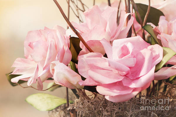Photograph - Pink Paper Roses by Cindy Singleton