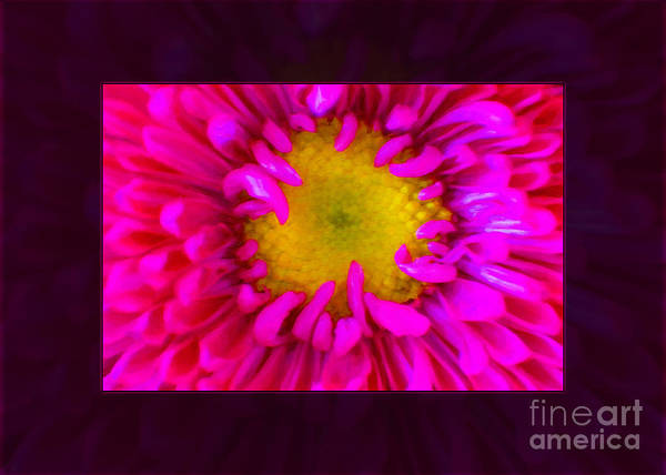 Painting - Pink Petals Envelop A Yellow Center An Abstract Flower Painting by Omaste Witkowski