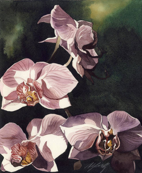 Painting - Pink Phalaenopsis Orchid by Alfred Ng