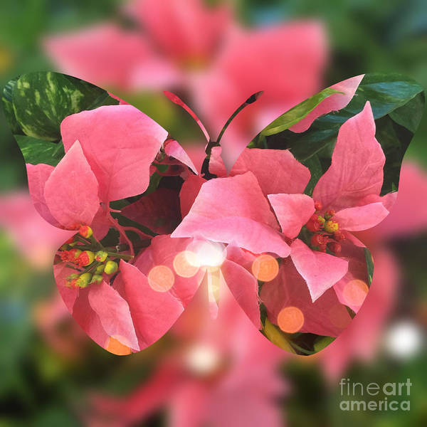 Digital Art - Pink Poinsettia Butterfly by Beverly Claire Kaiya