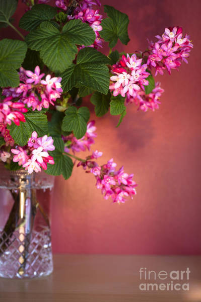 Currants Photograph - Pink Posy by Jan Bickerton