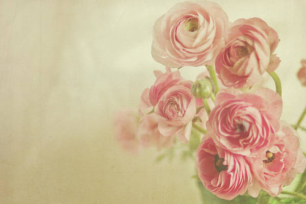 Photograph - Pink Ranunculus Bunch Of Flower by Photography By Angela - Tgtg