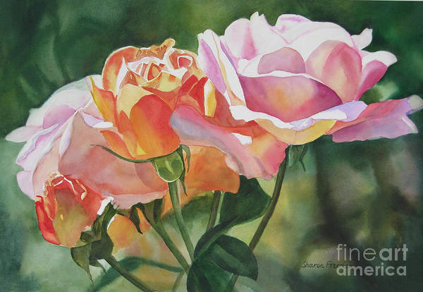 Pink Rose Buds And Blossoms Art Print