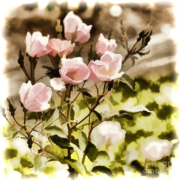 Painting - Pink Rose Flower Painting Color 3221.02 by M K Miller