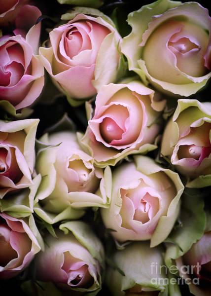 Photograph - Pink Roses by David Lichtneker