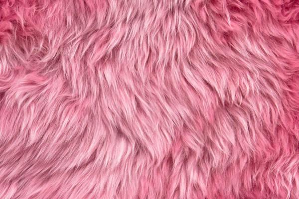 Wall Art - Photograph - Pink Sheepskin by Tom Gowanlock