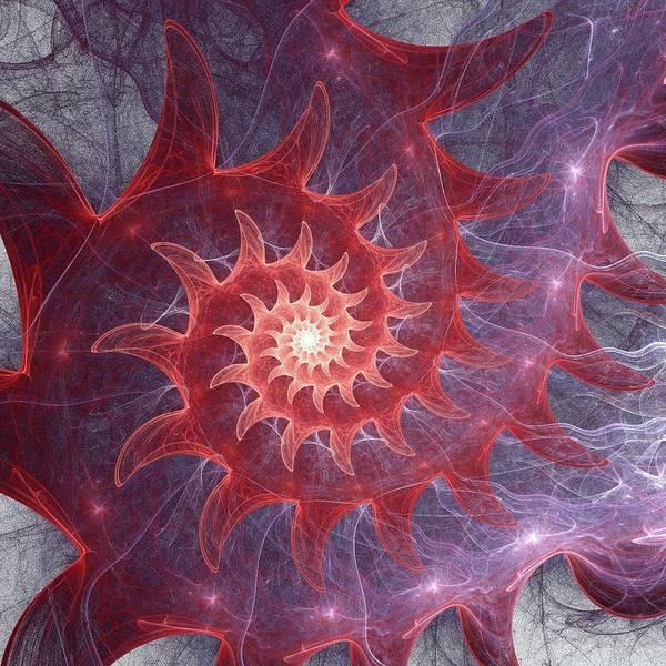 Digital Art - Pink Shell by Anastasiya Malakhova