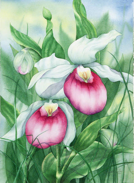 Painting - Pink Showy Lady Slippers by Johanna Axelrod