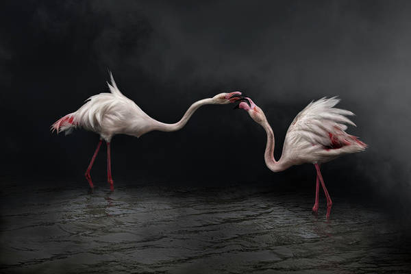 Kissing Photograph - Pink Strategy by Martine Benezech