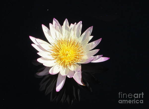 Photograph - Pink-tinged Waterlily by Kathie Chicoine