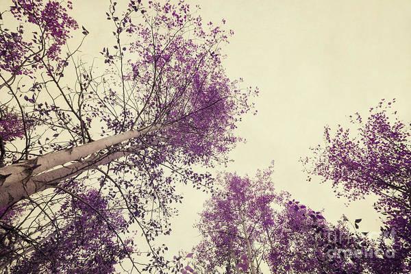 Wall Art - Photograph - Pink Trees by Priska Wettstein
