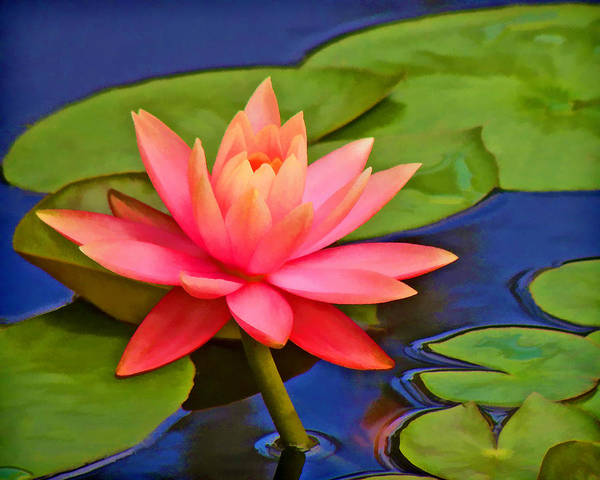Photograph - Pink Water Lily  by Grace Dillon