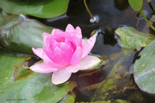 Painting - Pink Water Lily by Susan Schroeder
