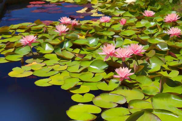 Arch Mixed Media - Pink Waterlilies by Cliff Wassmann