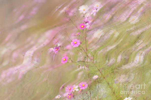 Photograph - Pink Wild Flower by Dan Friend