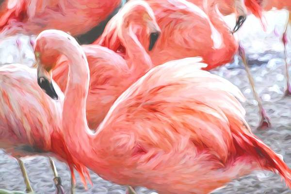 Photograph - Pinked Flamingos by Alice Gipson