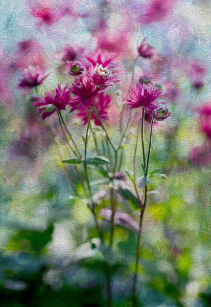 Oil Paint Photograph - Pinker by Rebecca Cozart