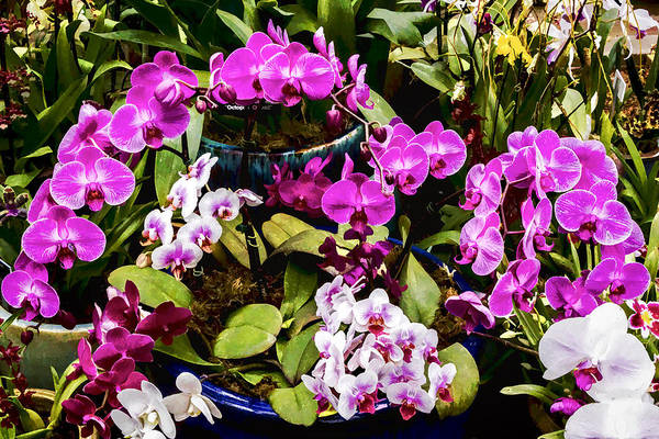 Digital Art - Pinkish Purple Orchids by Photographic Art by Russel Ray Photos