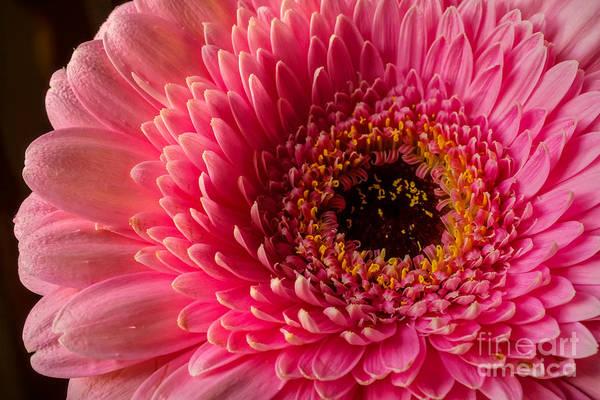 Photograph - Pinklady by Lutz Baar