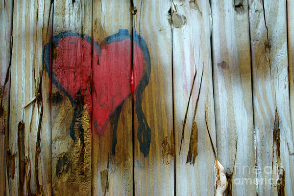 Photograph - Pinocchio's Heart by Glenda Wright