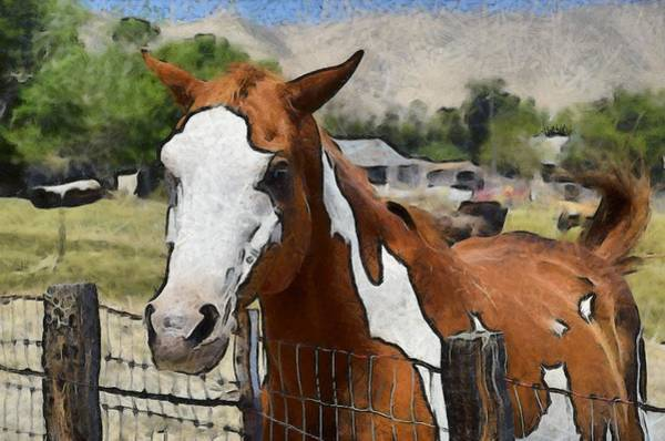 Live Stock Photograph - Pinto In The Pasture 2 Digital by Barbara Snyder
