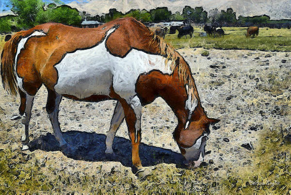 Live Stock Photograph - Pinto In The Pasture Digital by Barbara Snyder