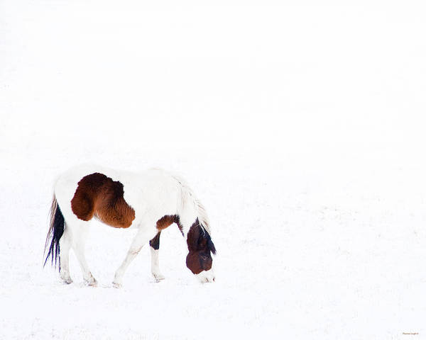 White Horse Photograph - Pinto Pony by Theresa Tahara