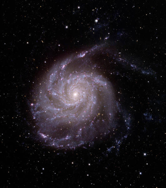 Pinwheel Photograph - Pinwheel Galaxy by J-c Cuillandre/canada-france-hawaii Telescope/science Photo Library