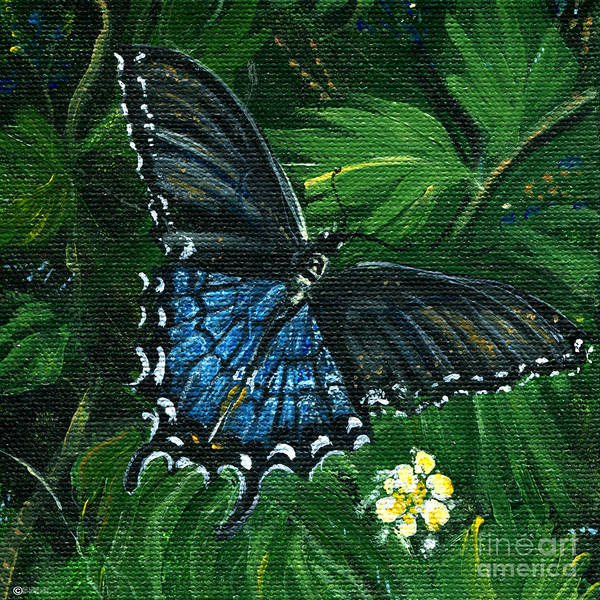 Painting - Pipevine Butterfly by Lizi Beard-Ward
