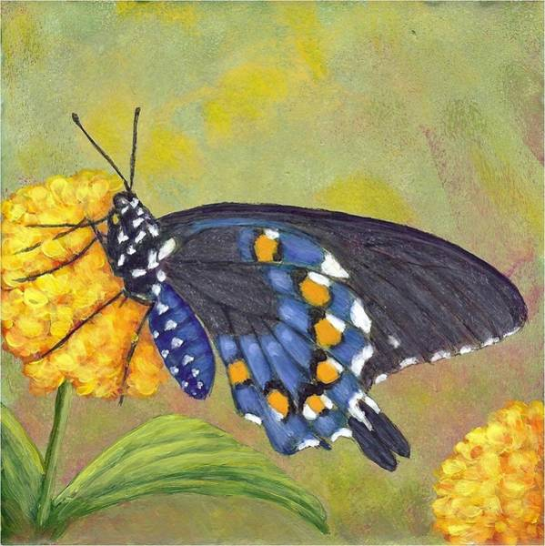Painting - Pipevine Swallowtail by Fran Brooks