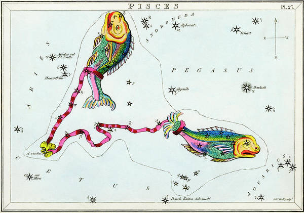 Mythological Photograph - Pisces Constellation by Royal Astronomical Society/science Photo Library