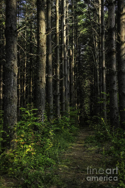 Photograph - Pisgah Forest Trail Color by David Waldrop