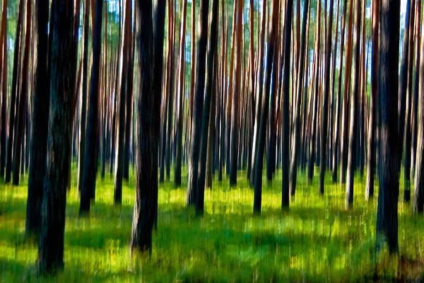 Photograph - Piska Forest by Tomasz Dziubinski