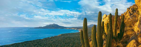 Baja California Peninsula Wall Art - Photograph - Pitaya Cactus Plants On Coast, Cabo by Panoramic Images