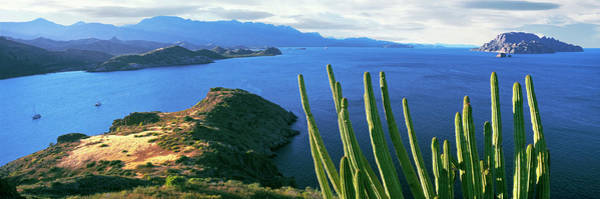 Sea Of Cortez Photograph - Pitaya Cactus, Punta El Puertecito by Panoramic Images