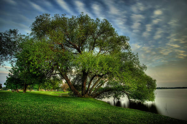 Canon Eos 6d Photograph - Pithers Willow by Jakub Sisak