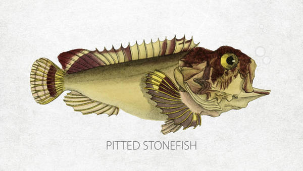 Wall Art - Digital Art - Pitted Stonefish by Aged Pixel