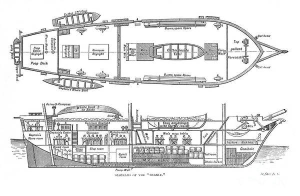 Aft Photograph - Plan Of The Hms Beagle, 1832 by Wellcome Images