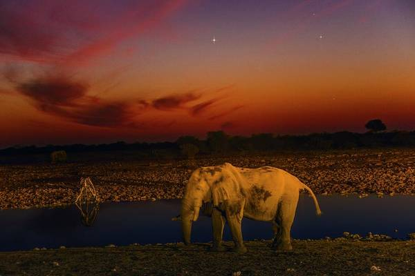 African Bush Elephant Photograph - Planetary Conjunction And An Elephant by Juan Carlos Casado (starryearth.com) / Science Photo Library