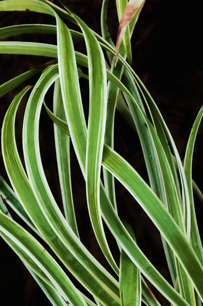 Photograph - Plant Abstract by Gary Slawsky