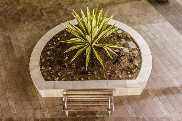 Digital Art - Plant And A Bench by Photographic Art by Russel Ray Photos